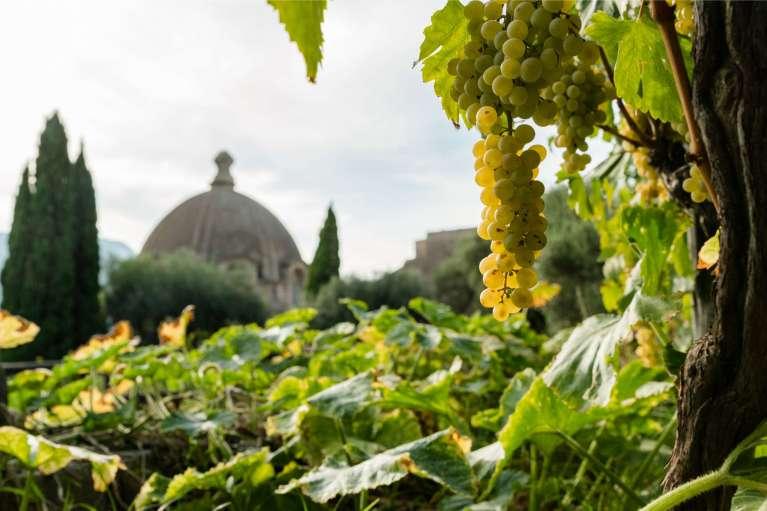 Der Wein des Castello